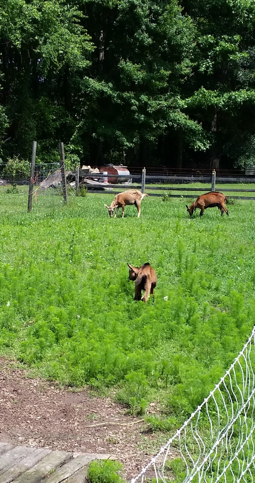 Goatmowers